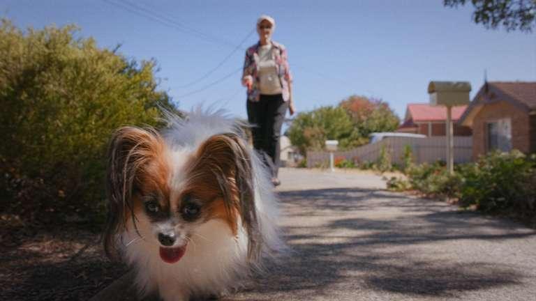 Home Visits, Shopping and Dog Walking